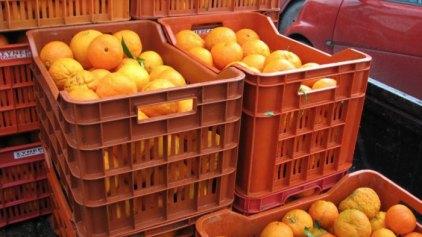 Αισιοδοξία για την εξαίρεση τριών ελληνικών προϊόντων από το ρωσικό εμπάργκο