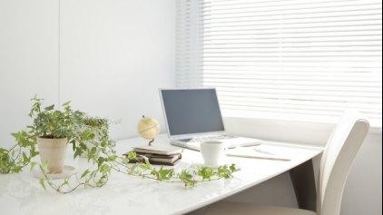 Τα φυτά στο γραφείο αυξάνουν την παραγωγικότητα!