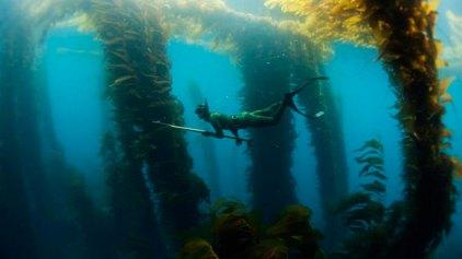 Ριψοκίνδυνοι «κυνηγοί» κάτω από το νερό!