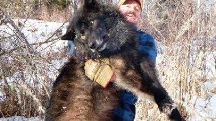 Kυνηγός σκότωσε λύκους για να αυξήσει τα ελάφια για τους συναδέλφους του