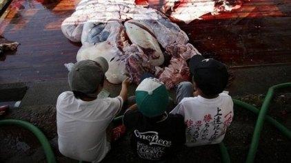 Εκδρομή μικρών μαθητών για να δούνε πως σφάζονται οι φάλαινες