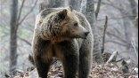 Αρκούδα έκανε βόλτα στο Αργος Ορεστικό