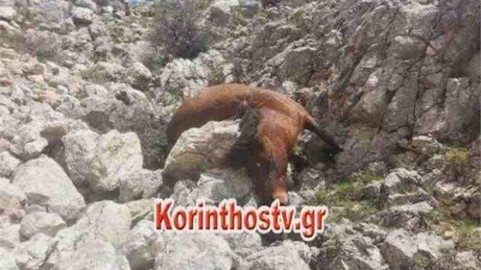 Κτήνη πυροβόλησαν και σκότωσαν 26 άλογα!