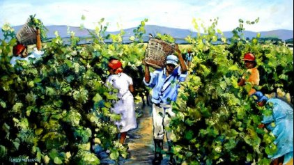 Sally Myburgh - Harvesting the Grapes