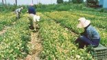 Start up στη γεωργία, τώρα!