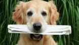Τα ζώα μας αγαπούν! Εμείς εκείνα;