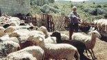 """Φωτιές """"άναψαν"""" τα δικαιολογητικά για τις επιδοτήσεις των κτηνοτρόφων!"""