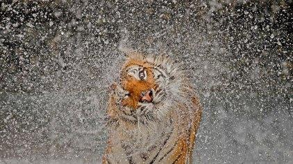 Αυτή είναι η φωτογραφία που κέρδισε στον φετινό διαγωνισμό του National Geographic