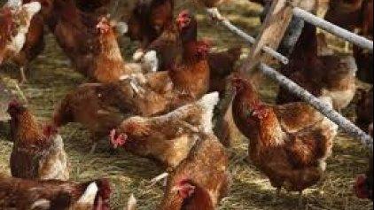 """Ζητά εξηγήσεις για τις παράνομες """"ελληνοποιήσεις"""", τώρα, και πουλερικών"""