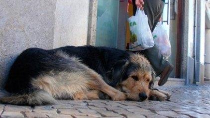 «Η Ελλάδα δεν θα γίνει ποτέ Ρουμανία»