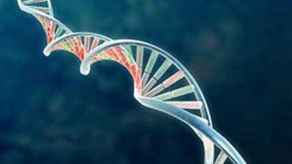 Γονιδιακή θεραπεία για την αντιμετώπιση της μεταχρωματικής λευκοδυστροφίας