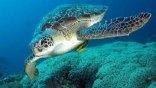 Προσθετικά μέλη και για θαλάσσιες χελώνες
