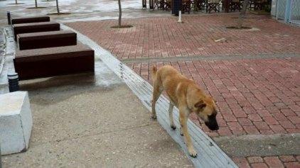 Σκύλος που επιτίθεται στο κέντρο της πόλης