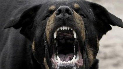 Μάνα και παιδί έζησαν στιγμές τρόμου από... αγριεμένα σκυλιά
