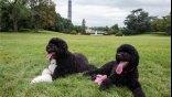 Αναμονή 120 ημερών για να ταξιδέψουν οι σκύλοι του Ομπάμα
