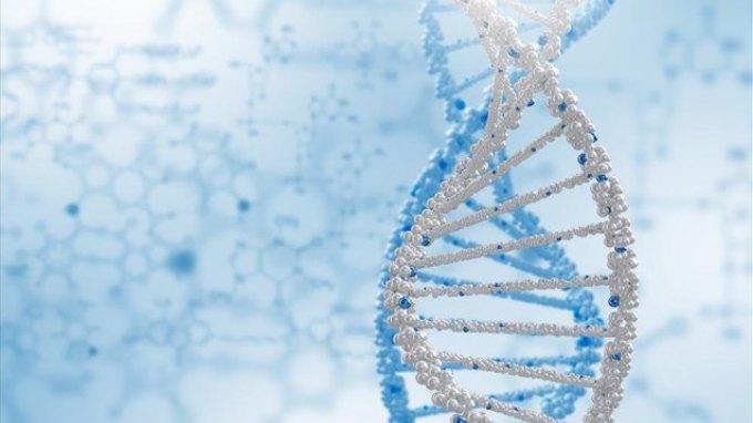 Γενετική «επανάσταση» μέσω «copy – paste» του DNA