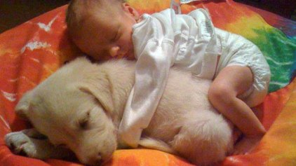 Τα ζώα είναι οι καλύτερες… νταντάδες!