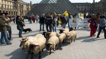 Μπήκαν ... τα πρόβατα στο Λούβρο!