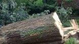 «Άγιο» είχαν πατέρας και γιος που γλίτωσαν από πτώση δέντρου