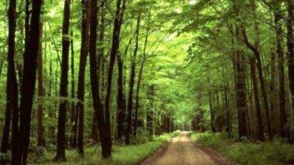 Τα δέντρα σώζουν ζωές