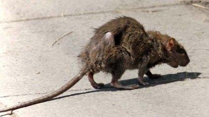 Έπιασε το ποντίκι και λίγο αργότερα πέθανε!