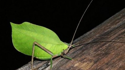 Τα έντομα και οι κινήσεις τους στην υπηρεσία της τεχνολογίας