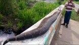 Χωρικοί θανάτωσαν ανακόντα 7,5 μέτρων στο Μεξικό