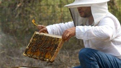 Μέλι από τον Ολυμπο, το πιο νόστιμο αντιβιοτικό του κόσμου