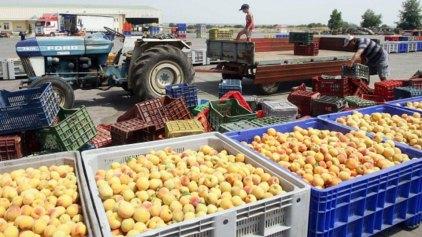 Μπλόκο από την Ρωσία στα ελληνικά φρούτα! Αντίποινα Πούτιν
