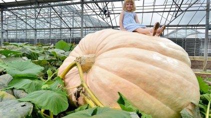 Καλλιέργησαν κολοκύθα που ζυγίζει 736 κιλά!