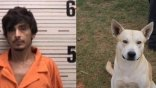 Έμπορος ναρκωτικών προδόθηκε στις αρχές από το... σκύλο του
