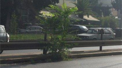 Ολόκληρο δέντρο φύτρωσε σε φρεάτιο σε έναν από τους πιο κεντρικούς δρόμους της Αττικής
