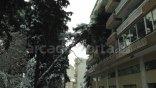 Δέντρο έπεσε πάνω σε πολυκατοικία
