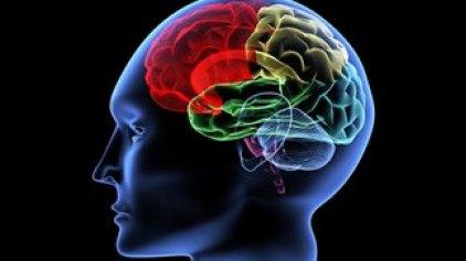 Ο μοριακός διακόπτης που κάνει τον εγκέφαλο «turbo»