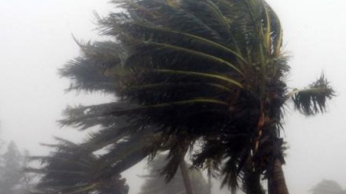 """Τα δέντρα """"χτύπησαν"""" οι δυνατοί άνεμοι"""