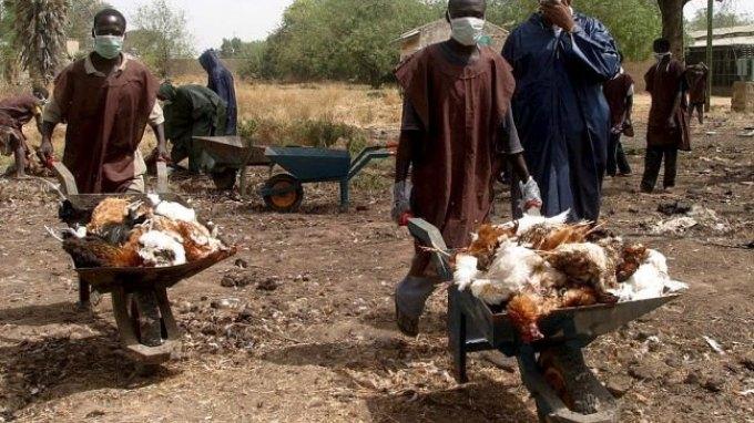 Επέστρεψε η γρίπη των πτηνών στη δυτική Αφρική