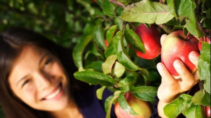Τα μήλα βοηθούν στη διατήρηση της καλής υγείας