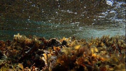 Ανακάλυψη βακτηρίου που καθαρίζει το ουράνιο από μολυσμένα υπόγεια ύδατα