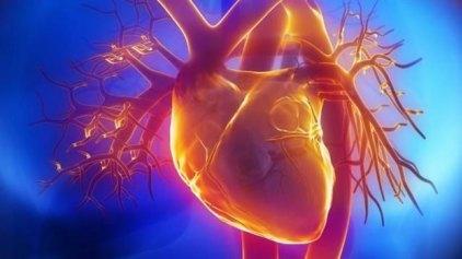 Ελπίδες αυτοανάπλασης της καρδιάς