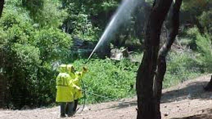 Δεύτερος ψεκασμός για το δάκο στους Δήμους Αγίου Βασιλείου και Αμαρίου