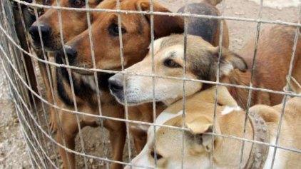 Χιλιάδες ζώα σαπίζουν αβοήθητα στα κυνοκομεία της χώρας