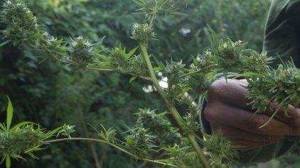 Άρχισε η νόμιμη πώληση χαπιών μαριχουάνας για ιατρικούς σκοπούς