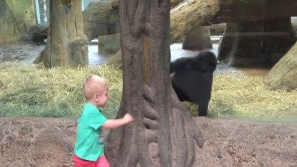 Μικρός γορίλας παίζει «κρυφτό» με νήπιο