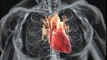 Κλείνουν τρύπες στην καρδιά με βιοδιασπώμενο «τσιρότο» και ειδική «κόλλα»