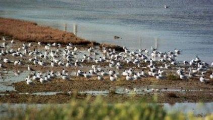 Στα ταξιδιάρικα πουλιά αφιερωμένη η φετινή Ευρωπαϊκή Γιορτή πουλιών