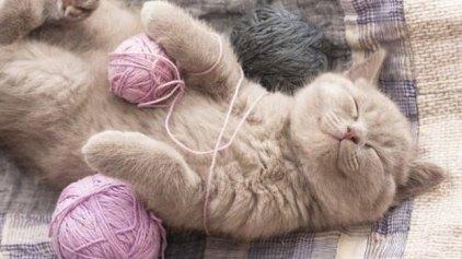 Μουσική για… γάτες