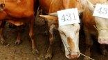 Η Κίνα φτιάχνει το μεγαλύτερο εργοστάσιο κλωνοποίησης ζώων