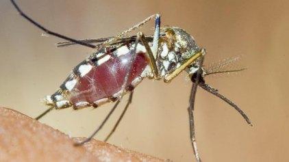 Και στην Ευρώπη ο ιός Ζίκα;