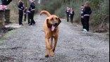 Σκύλος το έσκασε για να τρέξει… Μαραθώνιο!
