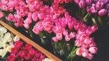 Τα λουλούδια του Αγίου Βαλεντίνου -Τι συμβολίζει το καθένα